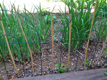 Bamboo stake fencing at Happy Simple Living blog