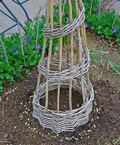 Willow support for peas