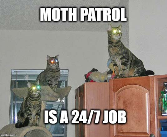 Kitty Moth Patrol