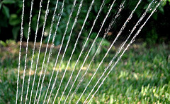 Sprinkler at Happy Simple Living