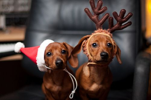 Christmas dogs at Happy Simple Living blog