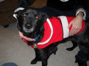 Maddie the Christmas dog at Happy Simple Living blog
