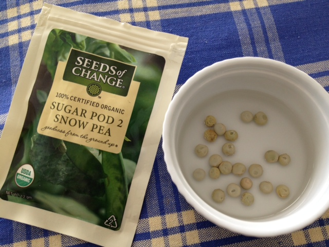 peas soak before planting at Happy Simple Living blog