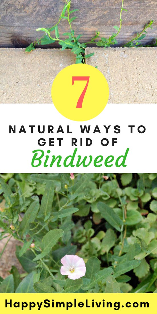 Get Rid Of Bindweed Naturally Hy Simple Living