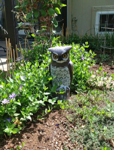 Fake owl to scare off rabbits at Happy Simple Living blog