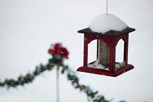 Red birdfeeder in snow