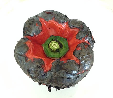 A blackened red bell pepper