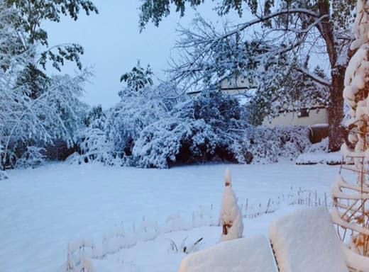 Spring Snowstorm in Colorado