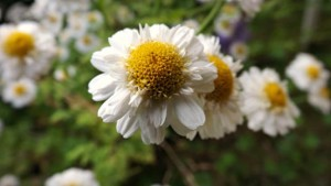 Daisy at Happy Simple Living blog