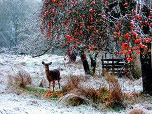 Beautiful deer in snowy field | Happy Simple Living