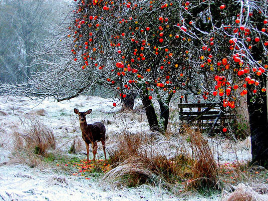 Beautiful deer in snowy field | Happy Simple Living
