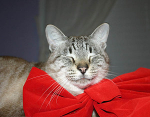 Christmas cat | Happy Simple Living blog