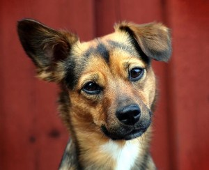 Dog with tilted head | Happy Simple Living blog