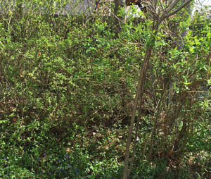 New garden before | Happy Simple Living blog