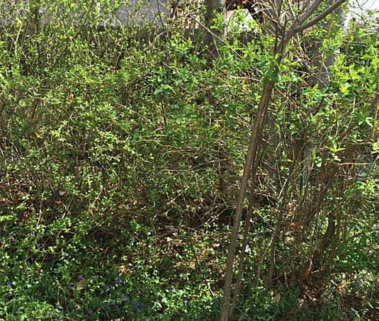 New garden before   Happy Simple Living blog