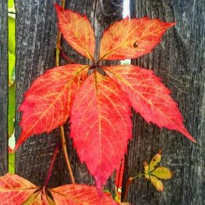 Autumn leaf   Happy Simple Living blog
