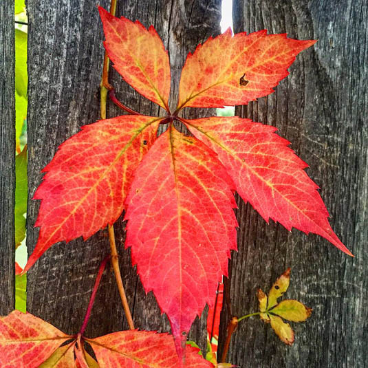 Autumn leaf | Happy Simple Living blog