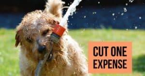 Cut an expense | January Money Diet