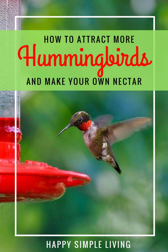 Make your own Hummingbird Nectar | #hummingbirds #birdfeeder #birdwatching