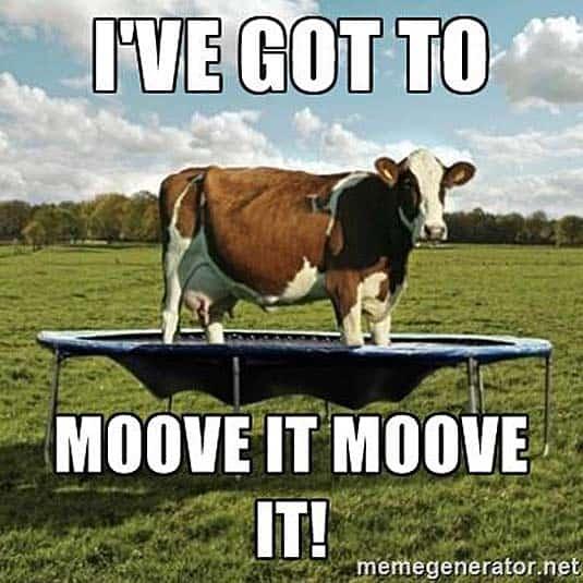 cow trampoline