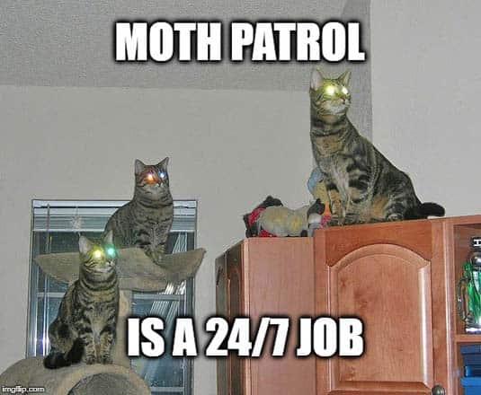 Kitty Moth Patrol