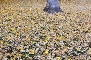 autumn leaves yard