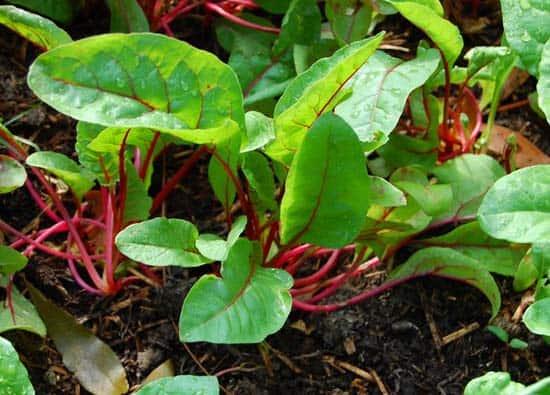 Enhance garden soil