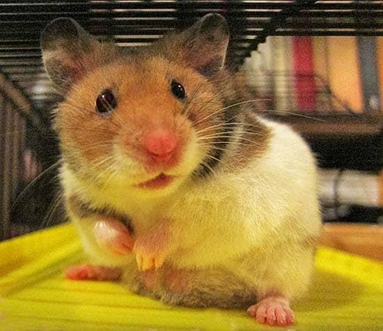 A meditation for hamster wheel mind | #sleeptips